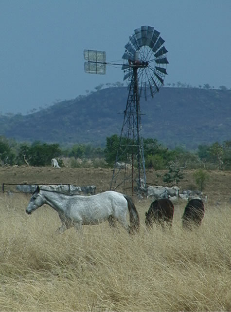 sanford_windmill_horse.jpg