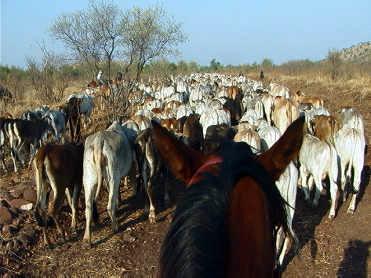 horse_ears.jpg