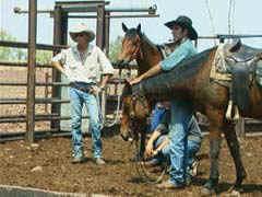 cattlepen.jpg