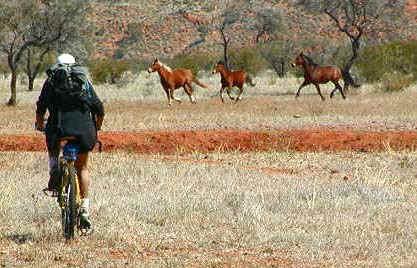 horseswithapril.jpg