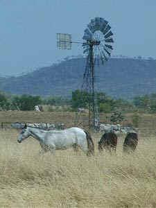 windmill_horse.jpg