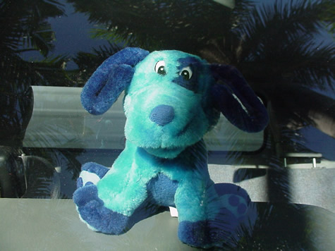 bluedog_close.2jpg.jpg