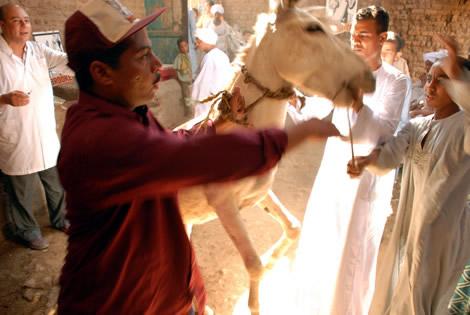 boy_donkey_rearing.jpg
