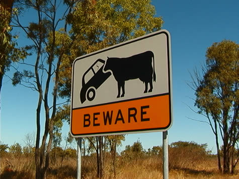 car_stomping_cow_sign.jpg