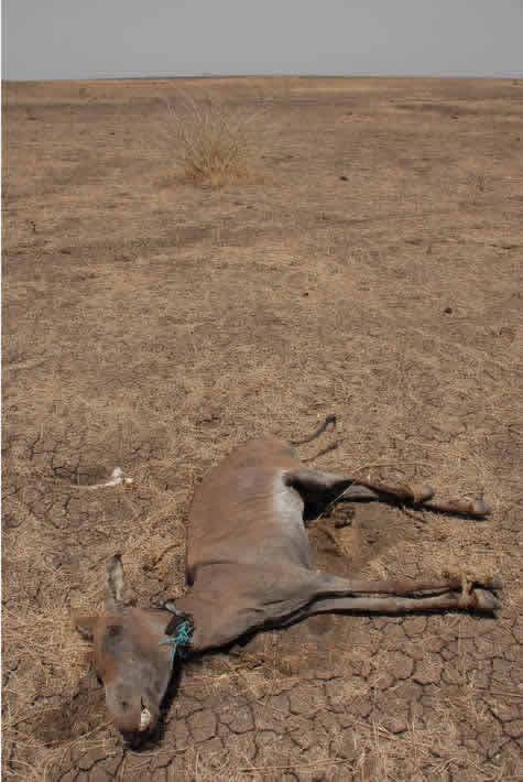 dead_donkey_wide.jpg