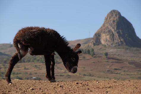 donkey_scratch.jpg