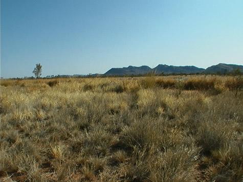 grassland_blue_hills.jpg