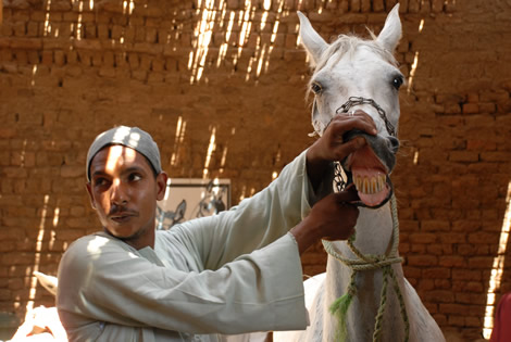 horse_teeth.jpg