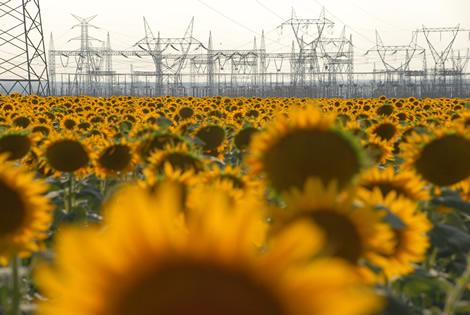 sunflowers_pylons.jpg