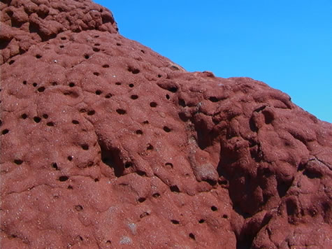 termite_mound_close-up.jpg