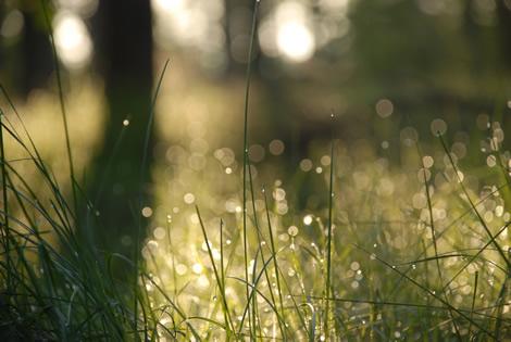 wet_grass_morning.jpg